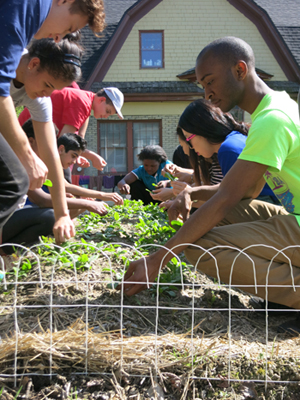 International college and middle school students work together to harvest the spinach they planted a few weeks earlier.