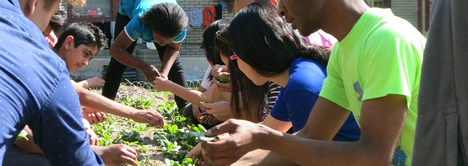 Campus garden grows international friendships